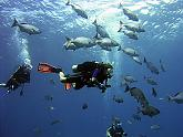 snorkelling with tropical fish turquoise bay resort roatan honduras