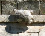 turtle-IMG_5364 mayan Puuc Maya site of Uxmal in the Yucantan