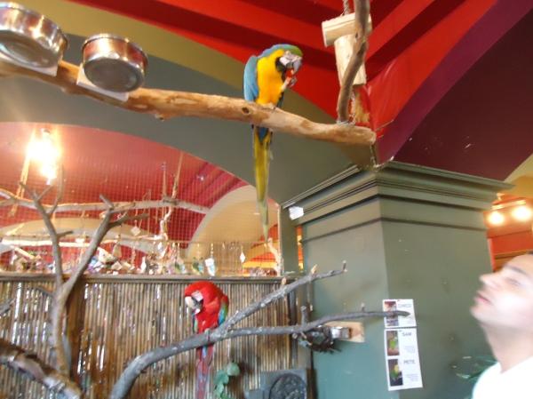 friendly funny mimic parrot bird kingdom niagara falls 17 jan 2014 linda randall